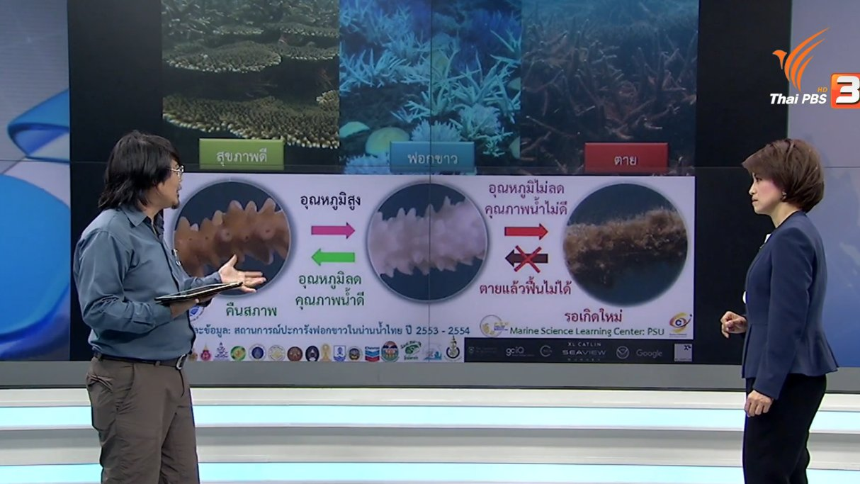 คิดยกกำลัง 2 - ปะการังฟอกขาว ปัญหาที่ต้องตื่นตัว