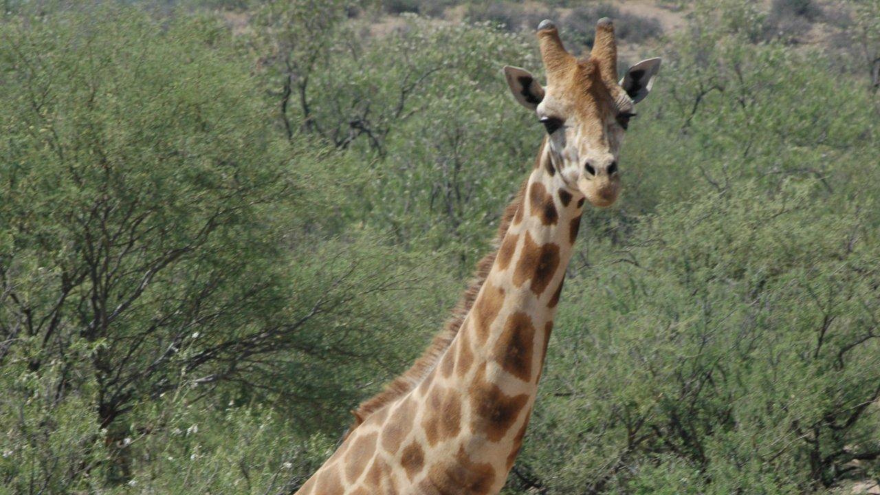 เปิดโลกสัตว์หรรษา - ไปรษณีย์จากแอฟริกา
