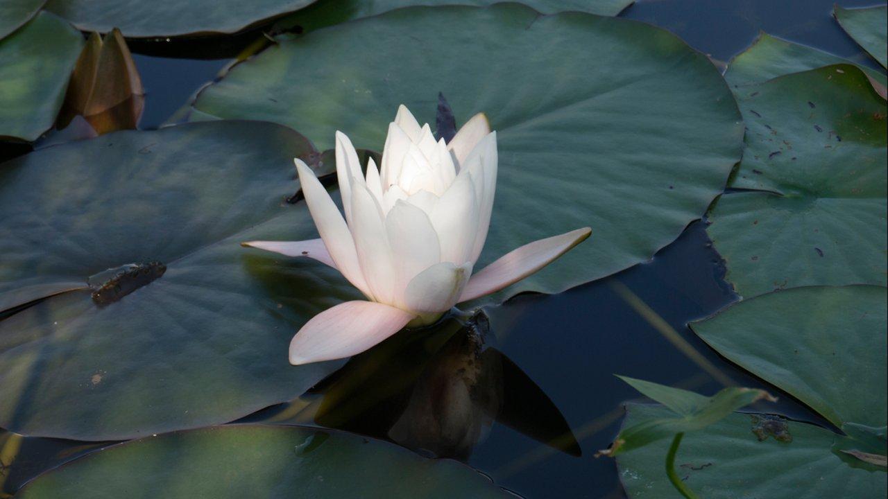ท่องโลกกว้าง - มหากาพย์ดอกไม้โลก ตอน ดอกกุหลาบและดอกบัว