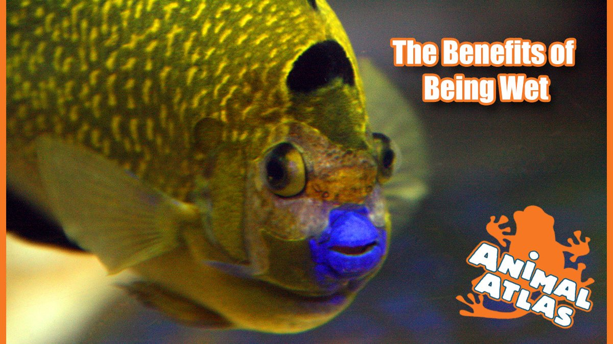เปิดโลกสัตว์หรรษา - ปลาสู้ๆ