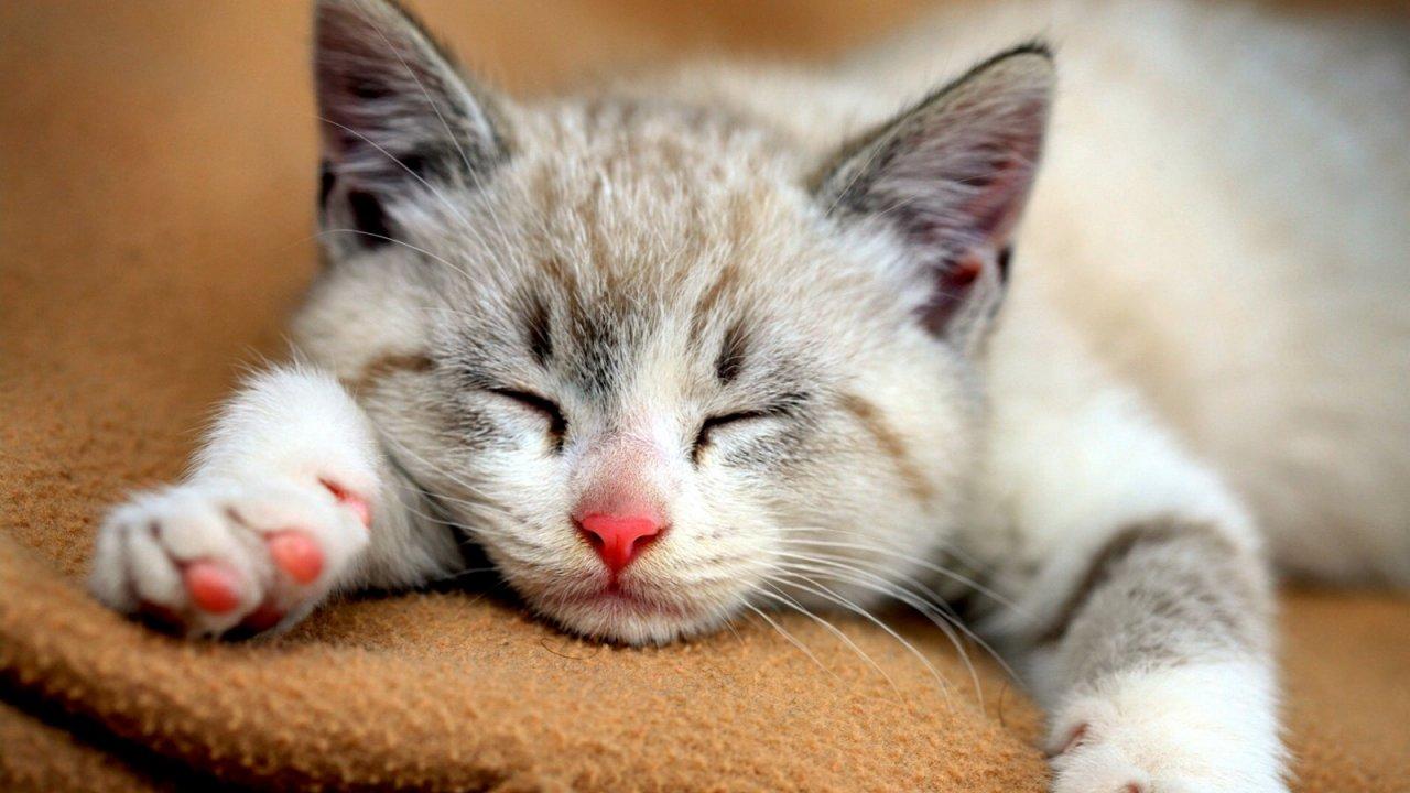 คิดส์ทันข่าว - วันแมวโลก