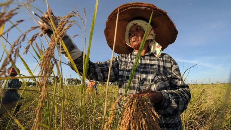 นารีกระจ่าง - ชาวนาเงินล้าน, เมนูจากข้าวสังข์หยด, ข้าวแปรรูปฝีมือคนไทย