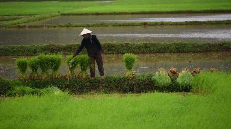 Spirit of Asia - ต้นฝนที่เมืองเขมร