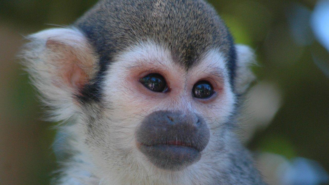 เปิดโลกสัตว์หรรษา - เรื่องของลิงและวานร