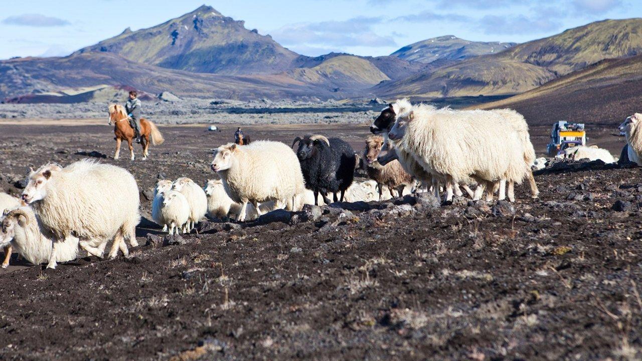 โลกหลากมิติ - โลก 360 องศา ตอน เลี้ยงแกะในไอซ์แลนด์