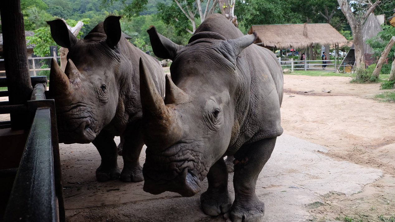Animals Speak - สวนสัตว์...แหล่งความรู้คู่ความสนุก ตอน 2