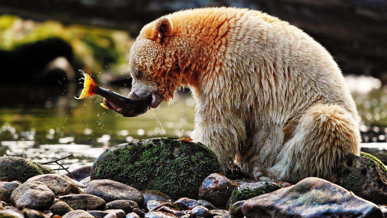 โลกหลากมิติ - การออกค้นหาหมีลึกลับ