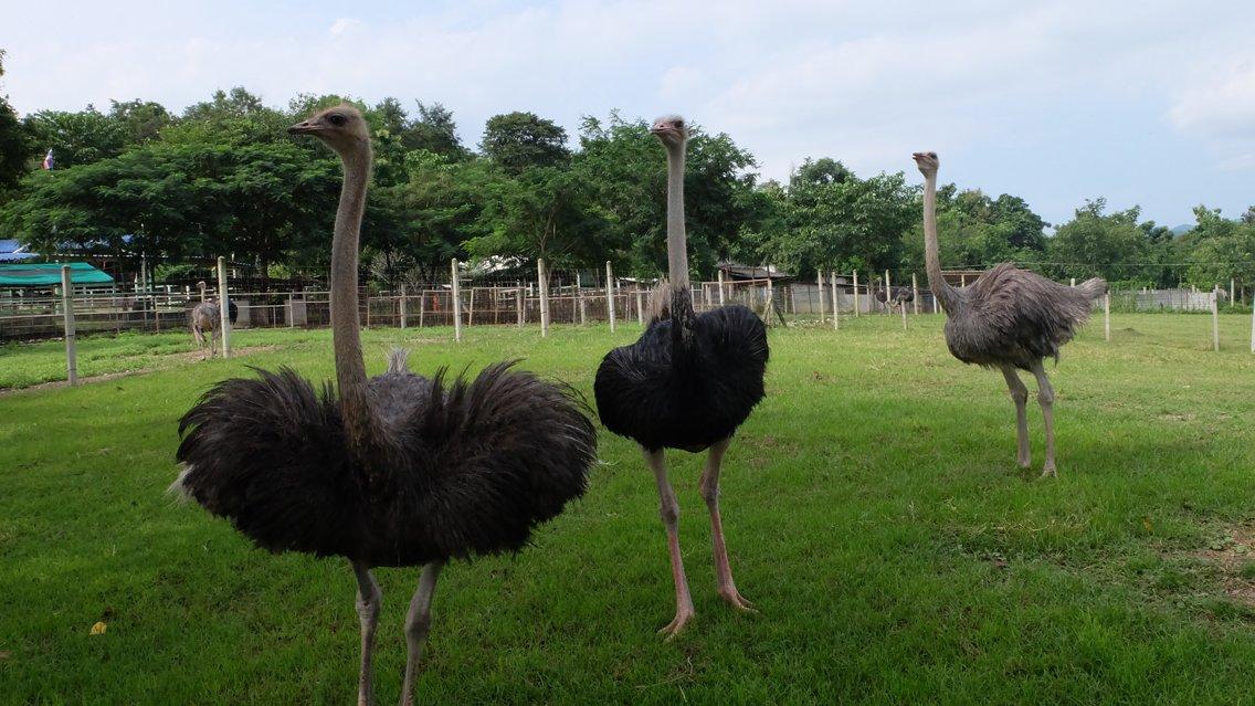 Animals Speak - เรื่องไม่กระจอกของนกกระจอกเทศ
