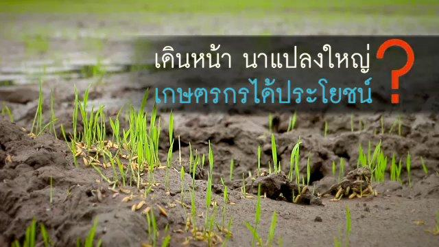 พลิกปมข่าว - เดินหน้า นาแปลงใหญ่ เกษตรกรได้ประโยชน์