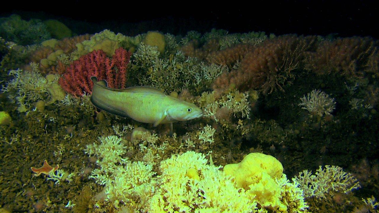 ท่องโลกกว้าง - แนวปะการังสุดลี้ลับ