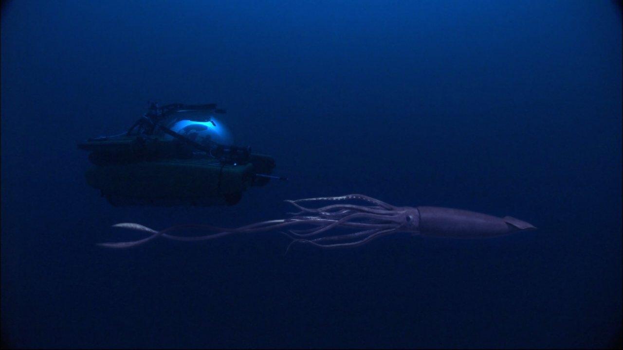 ท่องโลกกว้าง - สุดยอดตำนานแห่งท้องทะเล ตอน หมึกยักษ์