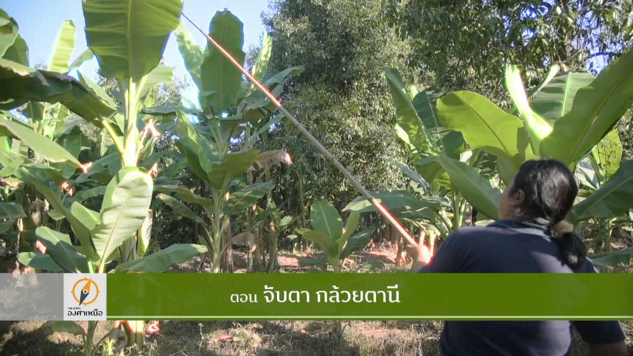 The North องศาเหนือ - จับตากล้วยตานี