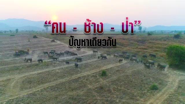 พลิกปมข่าว - คน ช้าง ป่า ปัญหาเดียวกัน