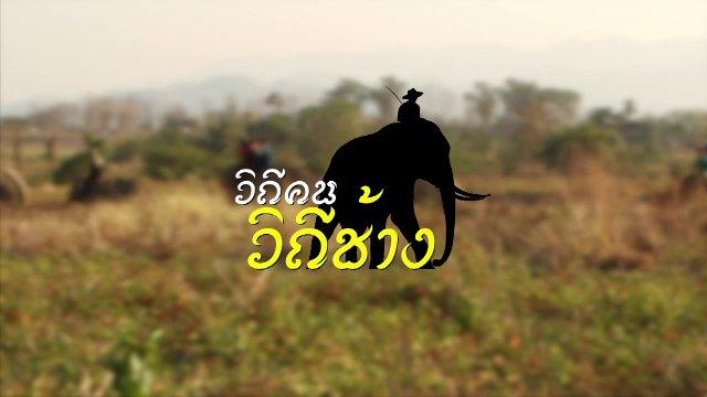 เวทีสาธารณะ - วิถีคน วิถีช้าง