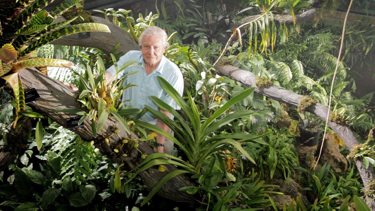 ท่องโลกกว้าง - อัศจรรย์อาณาจักรแห่งพืช ตอน ชีวิตในเขตชุ่มชื้น