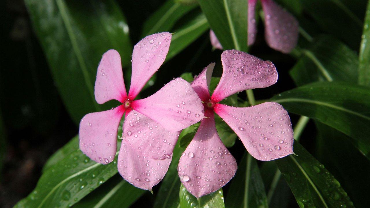ท่องโลกกว้าง - อัศจรรย์อาณาจักรแห่งพืช ตอน ปรับตัวเพื่อความอยู่รอด