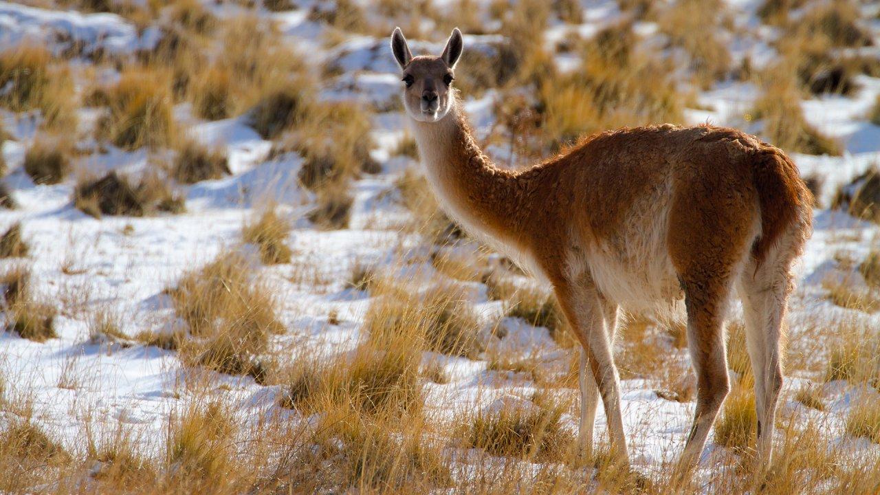 ท่องโลกกว้าง - อัศจรรย์ธรรมชาติปาตาโกเนีย ตอน ความร้อนและละอองฝุ่น