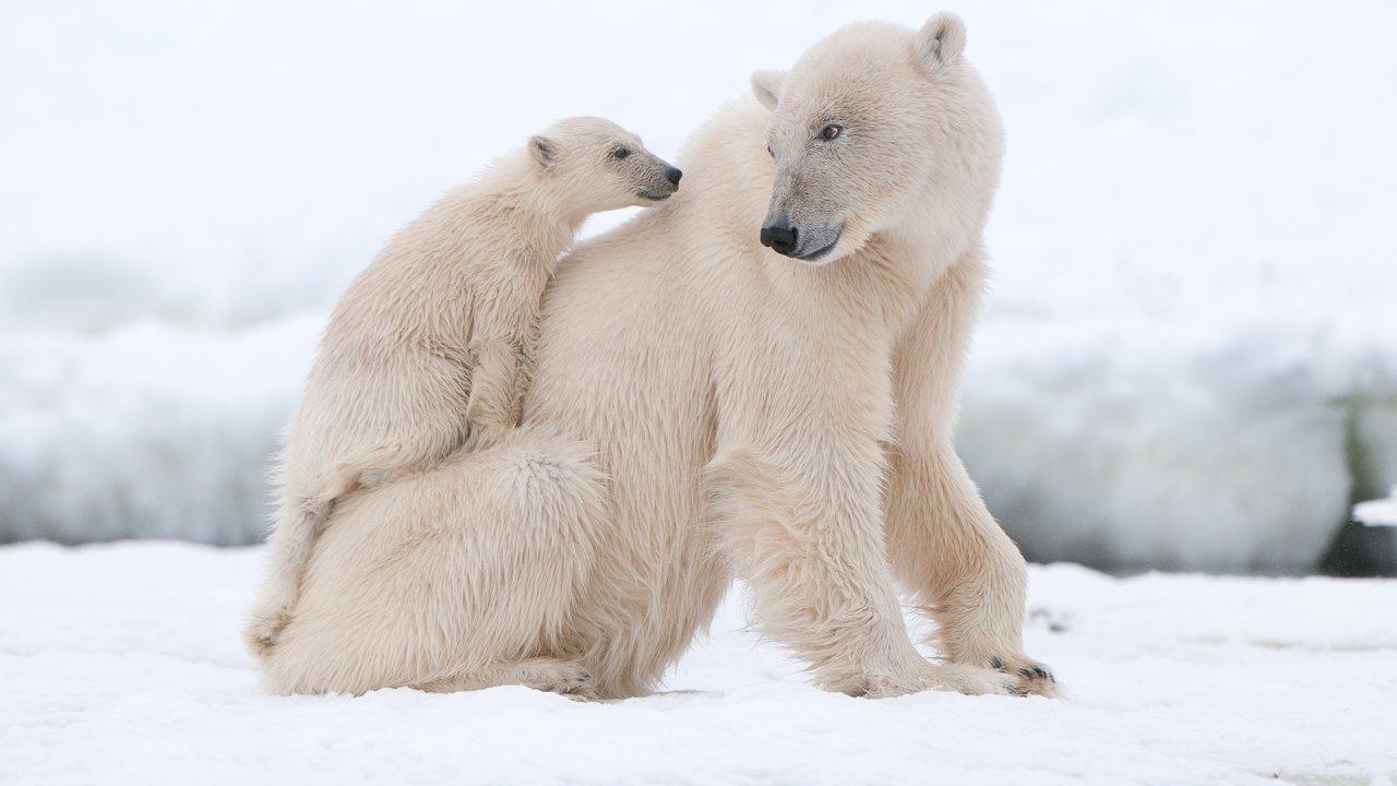 ท่องโลกกว้าง - น่าทึ่ง...ตะลึงกับธรรมชาติ ตอน อาร์กติก และ เยลโลว์สโตน