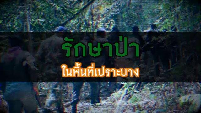 พลิกปมข่าว - รักษาป่าในพื้นที่เปราะบาง