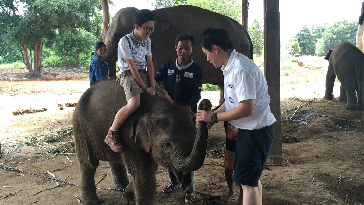 Animals Speak - คนเลี้ยงช้าง...ความผูกพันจากรุ่นสู่รุ่น