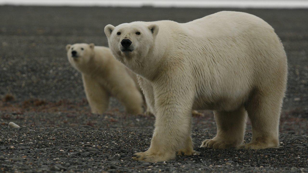 ท่องโลกกว้าง - รัสเซีย - ดินแดนแห่งเสือ หมี และภูเขาไฟ ตอนที่ 1/2