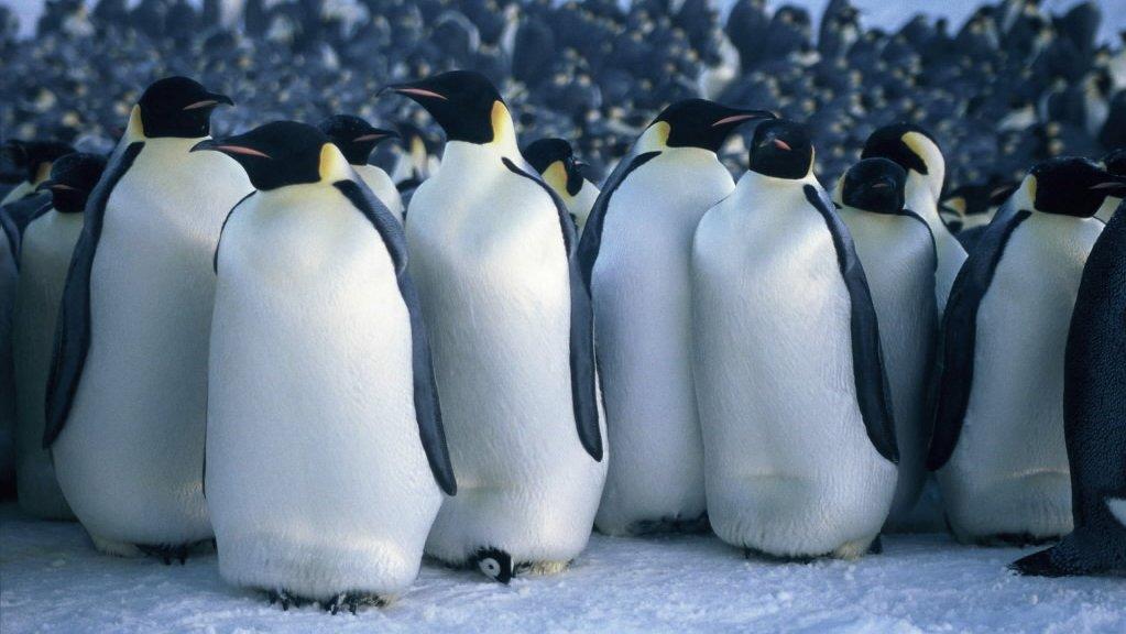 คิดส์ทันข่าว - เหล่าสัตว์แห่งแอนตาร์กติกา