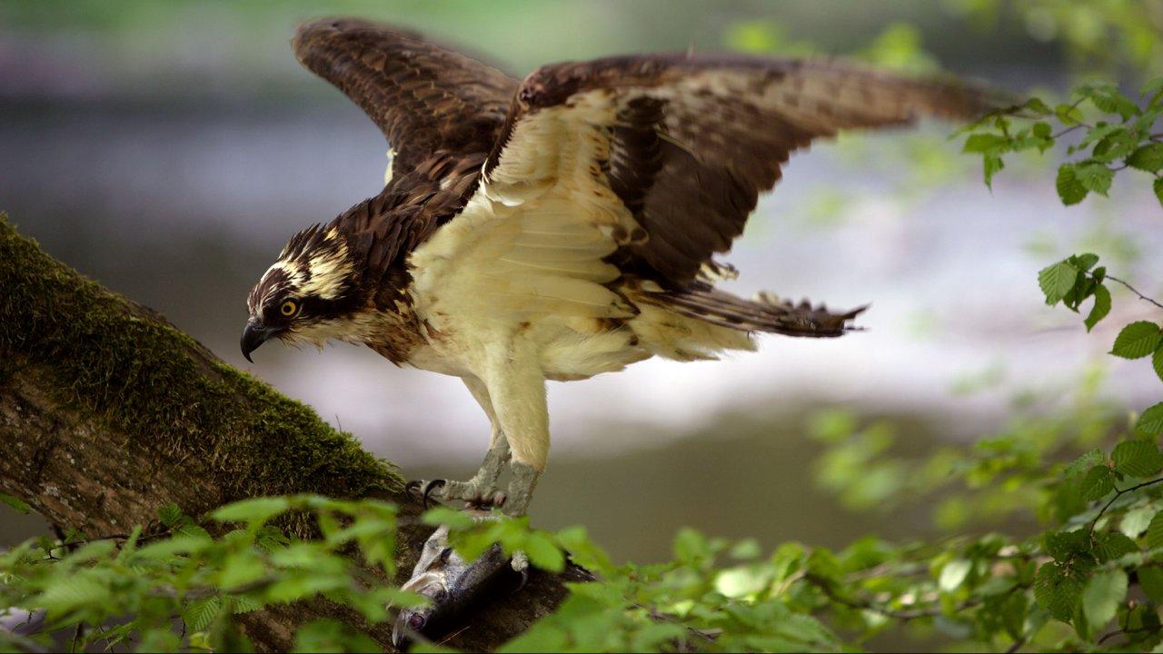 ท่องโลกกว้าง - อัศจรรย์ธรรมชาติป่าริมแม่น้ำไรน์