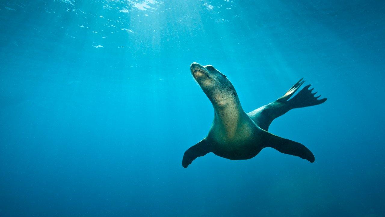ท่องโลกกว้าง - เจ้าสมุทรสีน้ำเงิน ตอน หลากชีวิตแห่งอ่าวมอนเทอเรย์
