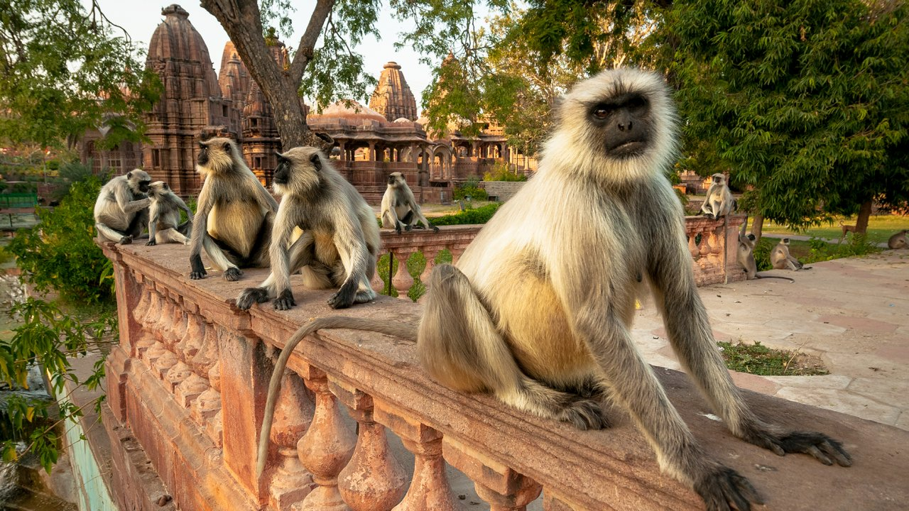ท่องโลกกว้าง - มหัศจรรย์ธรรมชาติอินเดีย ตอน ดินแดนแห่งการเปลี่ยนแปลง