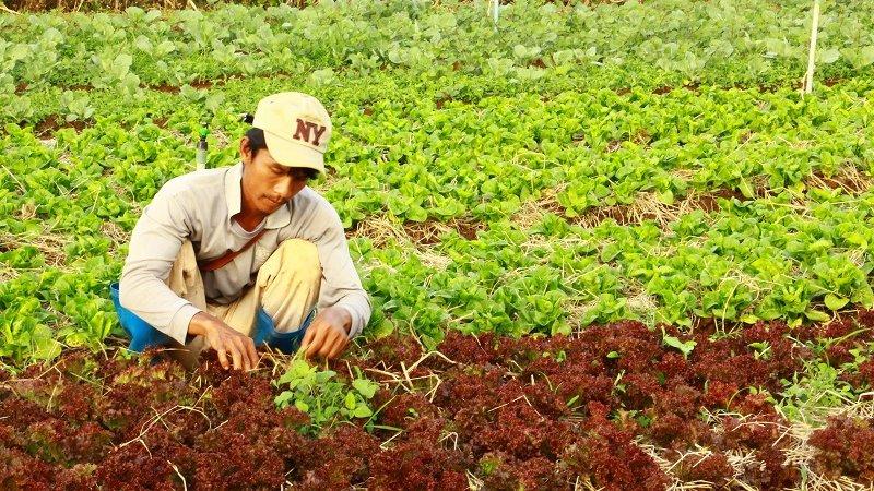 ทั่วถิ่นแดนไทย - เกษตรสร้างสุข โครงการส่งเสริมกสิกรรมไร้สารพิษตามโครงการพระราชดำริ  จ.นครราชสีมา