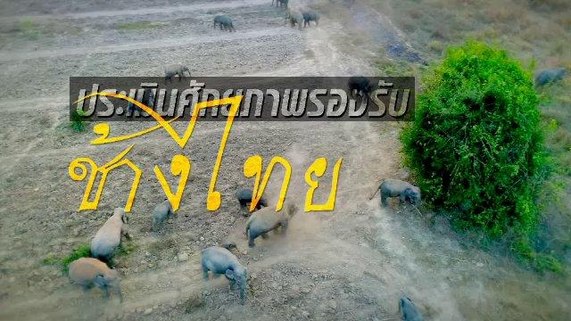 พลิกปมข่าว - ประเมินศักยภาพรองรับช้างไทย