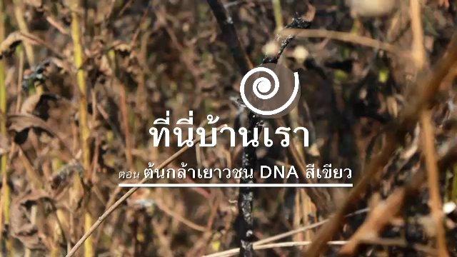 ที่นี่บ้านเรา - ต้นกล้าเยาวชน DNA สีเขียว