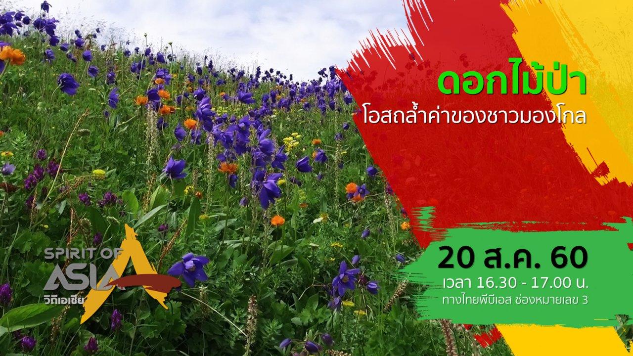 Spirit of Asia - ดอกไม้ป่า โอสถล้ำค่าของชาวมองโกล