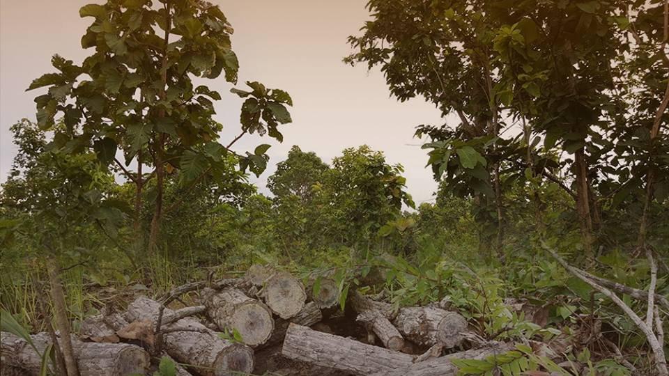 สถานีประชาชน - ร้องขอตรวจสอบโฉนดที่ดินอดีต ส.ส. 1,700 ไร่ อ.เชียงกลาง จ.น่าน ครอบครองเกินจริงหรือไม่?