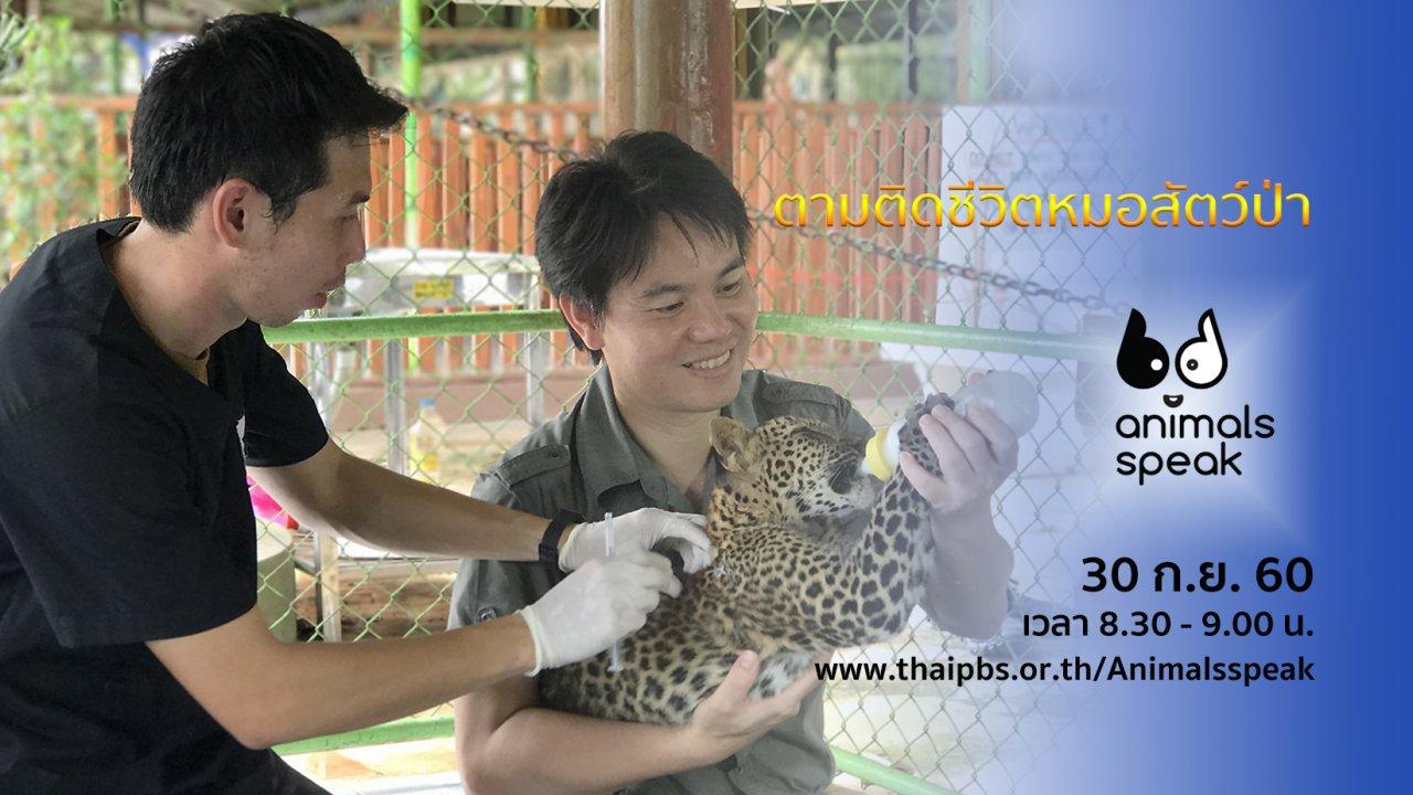 Animals Speak - ตามติดชีวิตหมอสัตว์ป่า