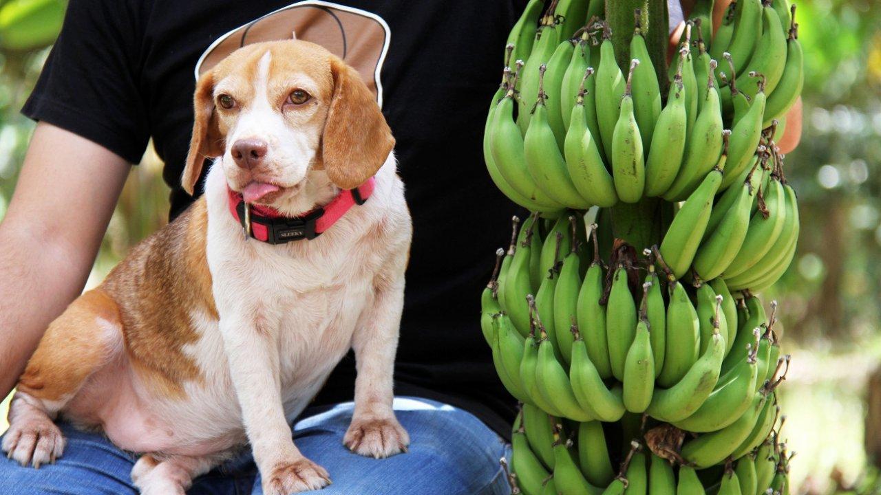 Foodwork - กล้วยเล็บมือนาง
