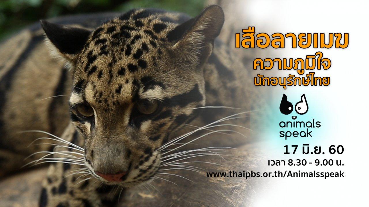 Animals Speak - เสือลายเมฆ ความภูมิใจนักอนุรักษ์ไทย