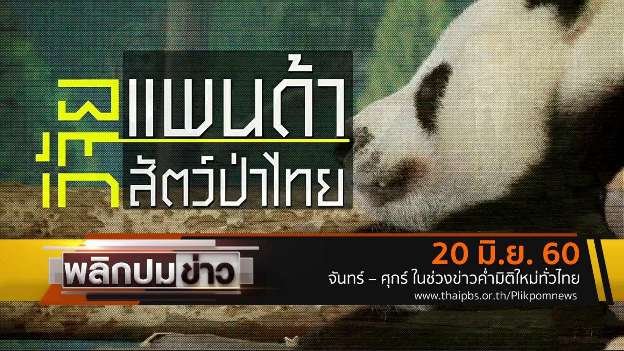 พลิกปมข่าว - วิจัยแพนด้า วิจัยสัตว์ป่าไทย