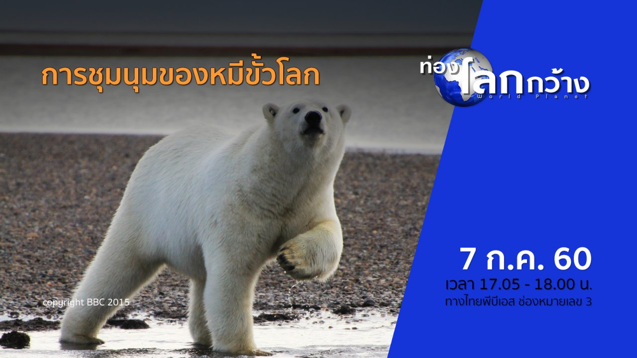 ท่องโลกกว้าง - การชุมนุมของหมีขั้วโลก