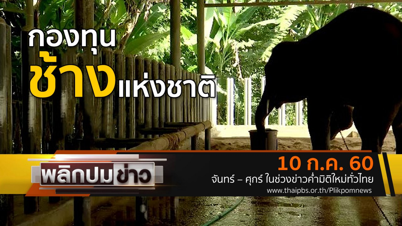 พลิกปมข่าว - กองทุนช้างแห่งชาติ