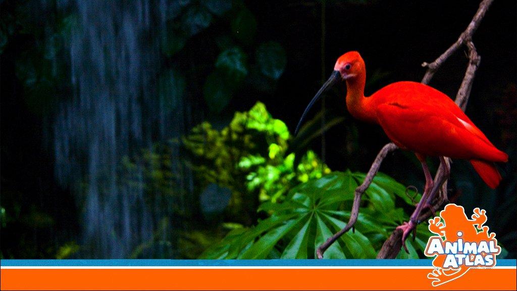 เปิดโลกสัตว์หรรษา - สัตว์ที่มีปีก
