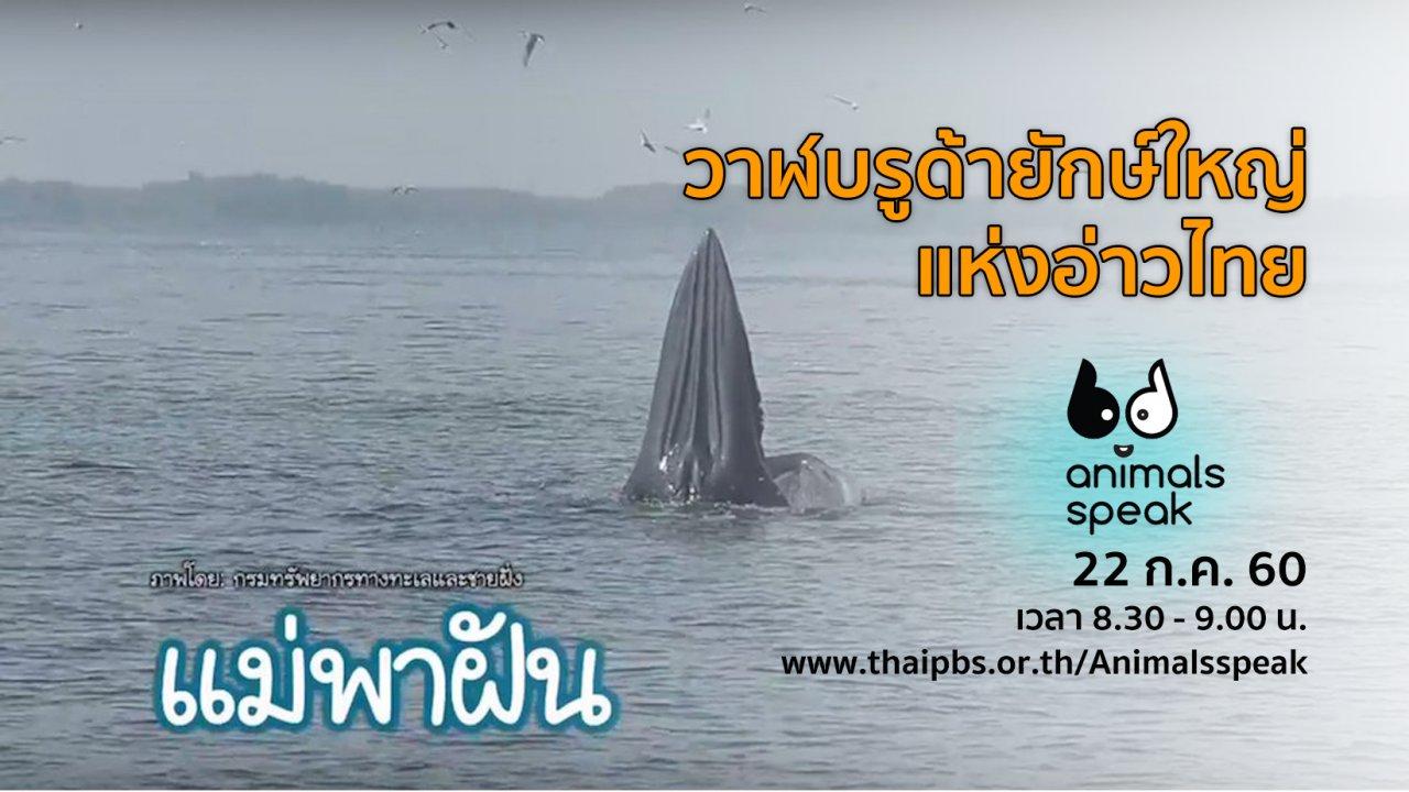 Animals Speak - วาฬบรูด้ายักษ์ใหญ่แห่งอ่าวไทย