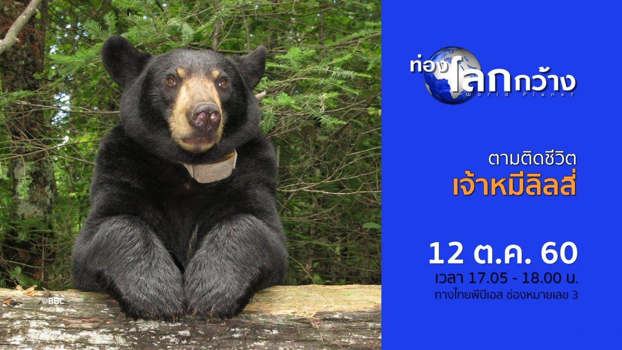 ท่องโลกกว้าง - ตามติดชีวิตเจ้าหมีลิลลี่