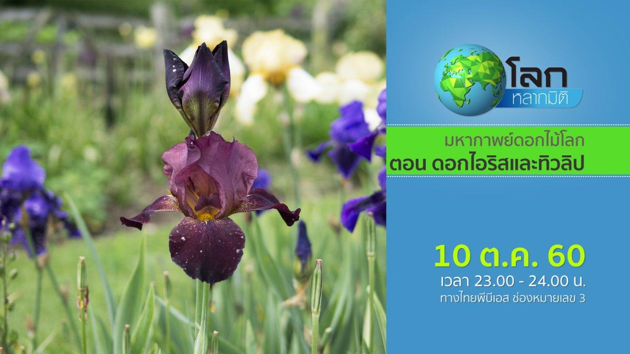 โลกหลากมิติ - มหากาพย์ดอกไม้โลก ตอน ดอกไอริสและทิวลิป
