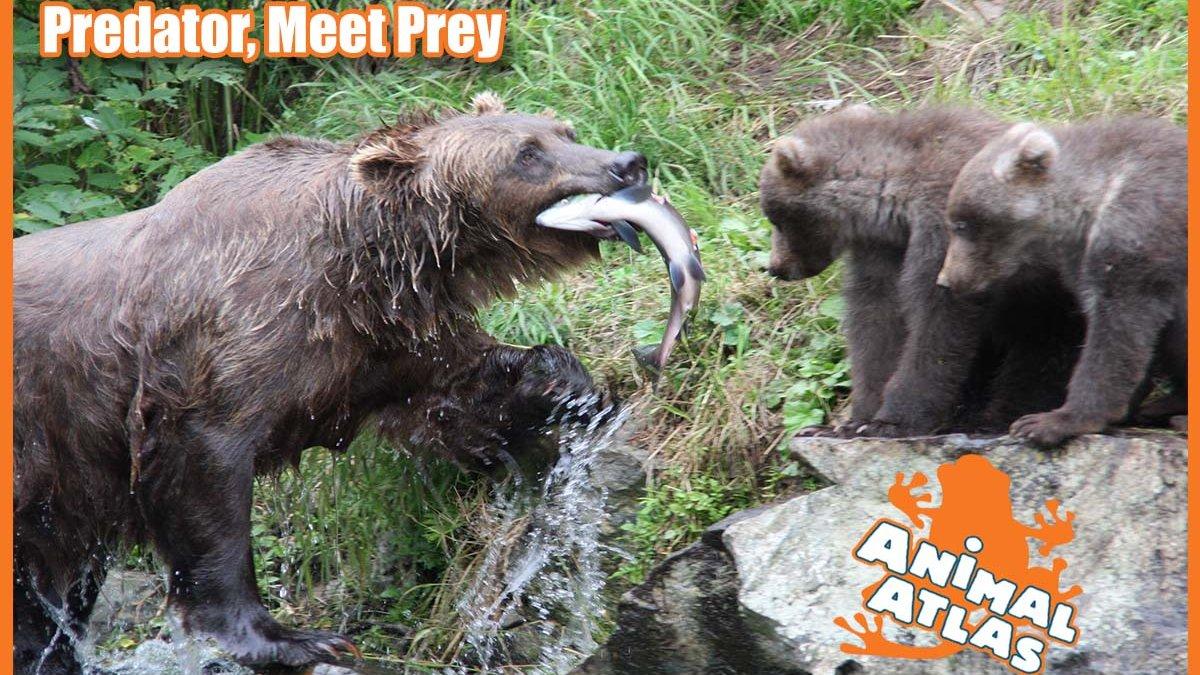 เปิดโลกสัตว์หรรษา - หิวเหมือนหมี