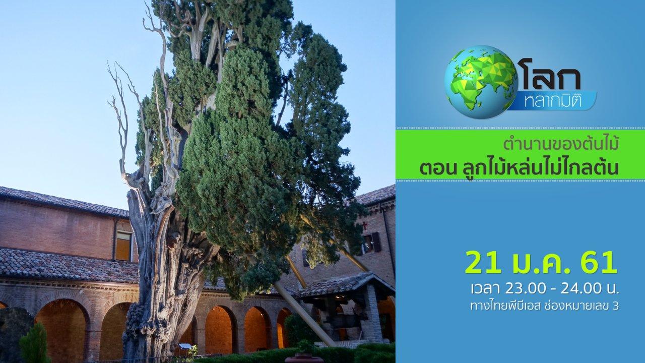 โลกหลากมิติ - ตำนานของต้นไม้ ตอน ลูกไม้หล่นไม่ไกลต้น