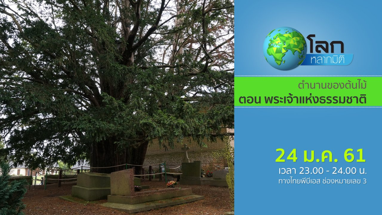 โลกหลากมิติ - ตำนานของต้นไม้ ตอน พระเจ้าแห่งธรรมชาติ