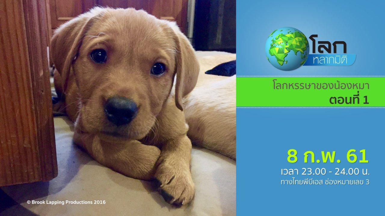 โลกหลากมิติ - โลกหรรษาของน้องหมา ตอนที่ 1