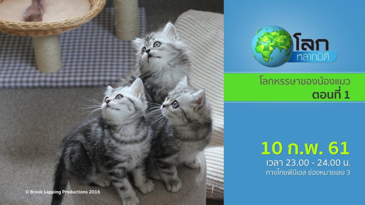 โลกหลากมิติ - โลกหรรษาของน้องแมว ตอนที่ 1