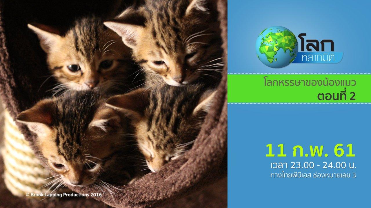 โลกหลากมิติ - โลกหรรษาของน้องแมว ตอนที่ 2